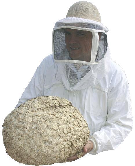Sch dlingsbek mpfung hamburg und kammerj ger hamburg wespenbek mpfung wespennest entfernen - Wespennest in der hauswand entfernen ...
