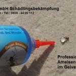 Ameisenbekämpfung mit Ameisengel