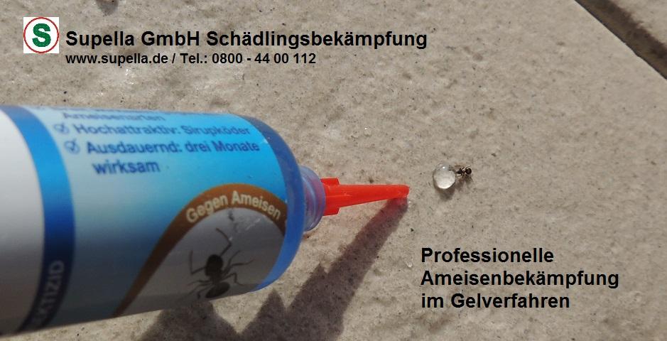 Schädlingsbekämpfung Hamburg und Kammerjäger Hamburg