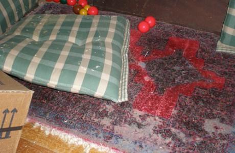 Kleidermottenbefall im Teppich