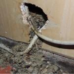Kabelschaden durch Rattenfraß