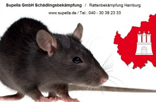 Ratten bekämpfen in Hamburg und Umgebung