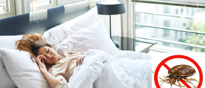 Bettwanzen im Hotel